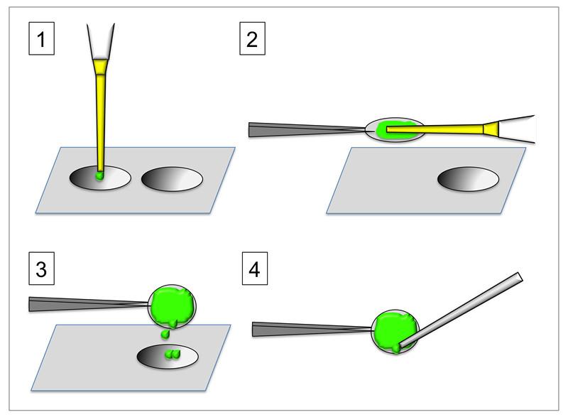 Gelatin Coating Glass Coverslip