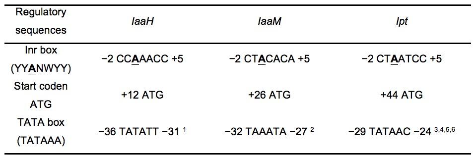 T Ligase Protocol Room Temperature