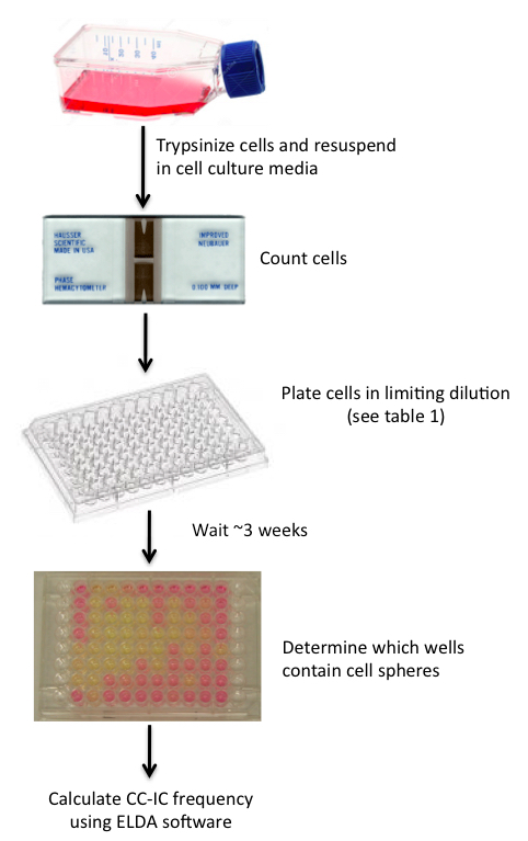 In vitro and in vivo Limiting Dilution Assay for Colorectal