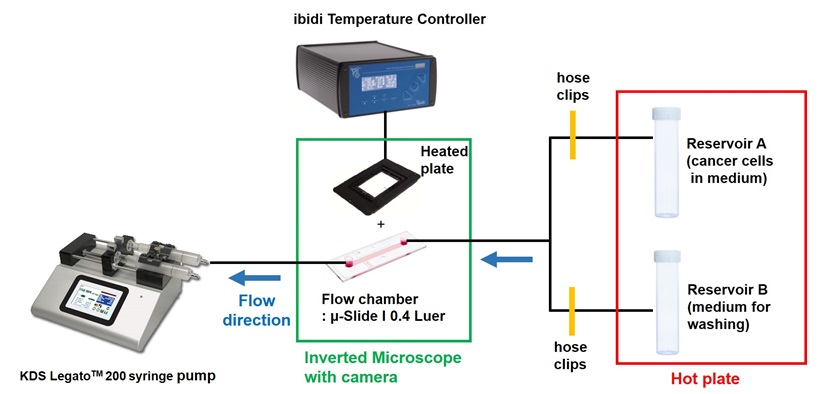 In Vitro Flow Adhesion Assay For Analyzing Shear Resistant