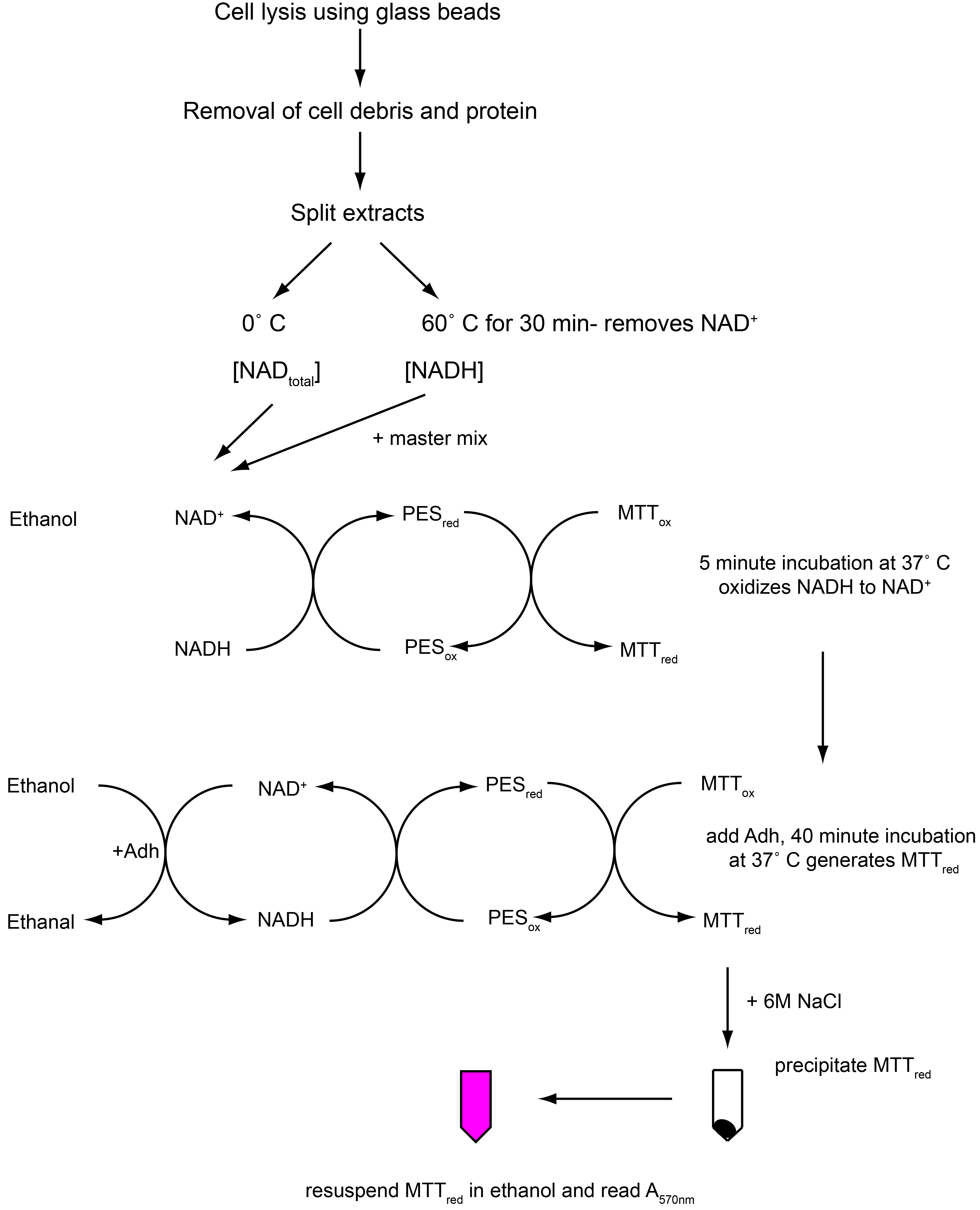 A modified chromogenic assay for determination of the ratio of flowchart illustrating protocol procedure parts b c nvjuhfo Images