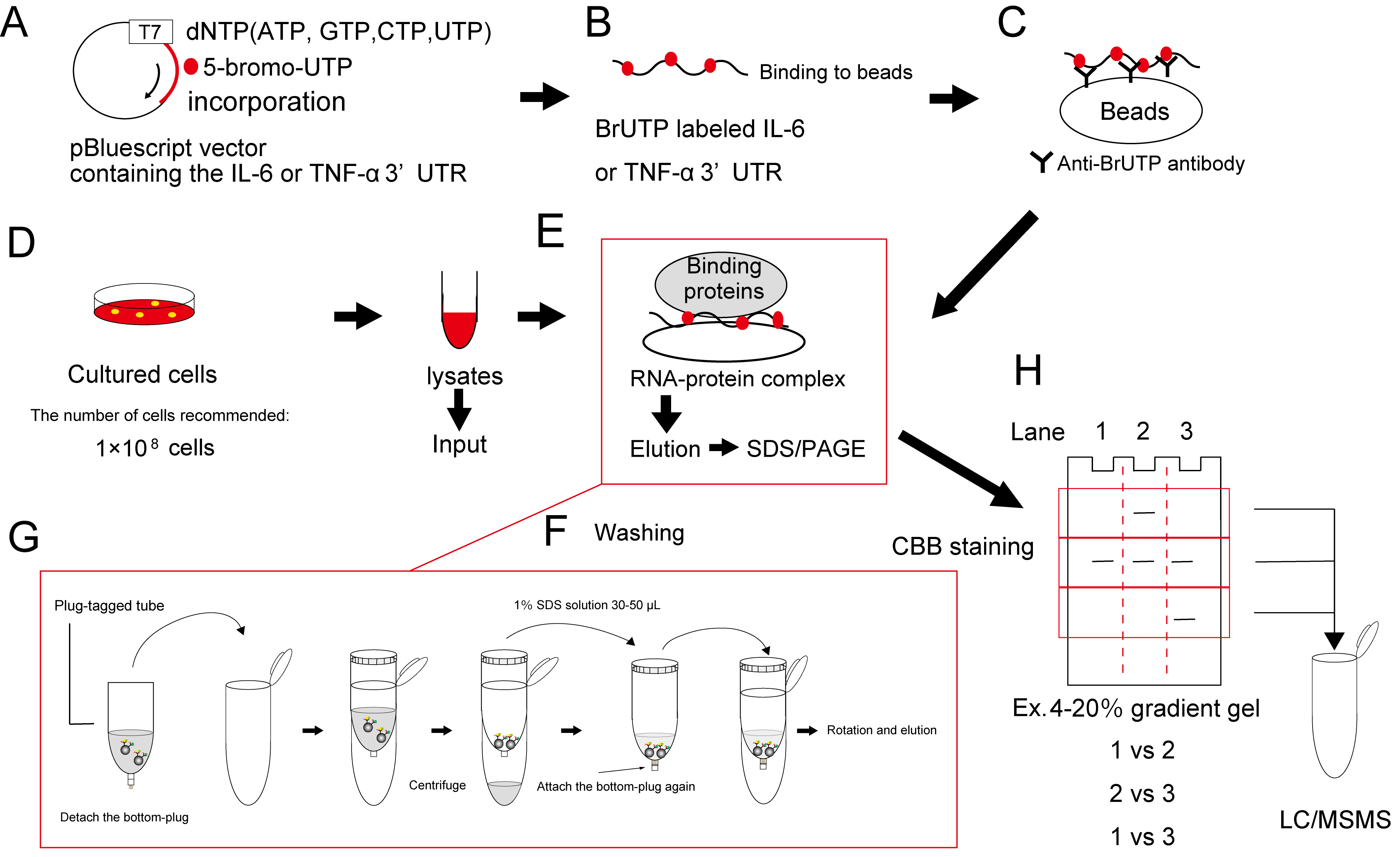 Identification Of Rna Binding Proteins Bio Protocol Circuit Diagram Labeled The Schematic Flowchart With Procedure Is Indicated Figure1 And Figure 2