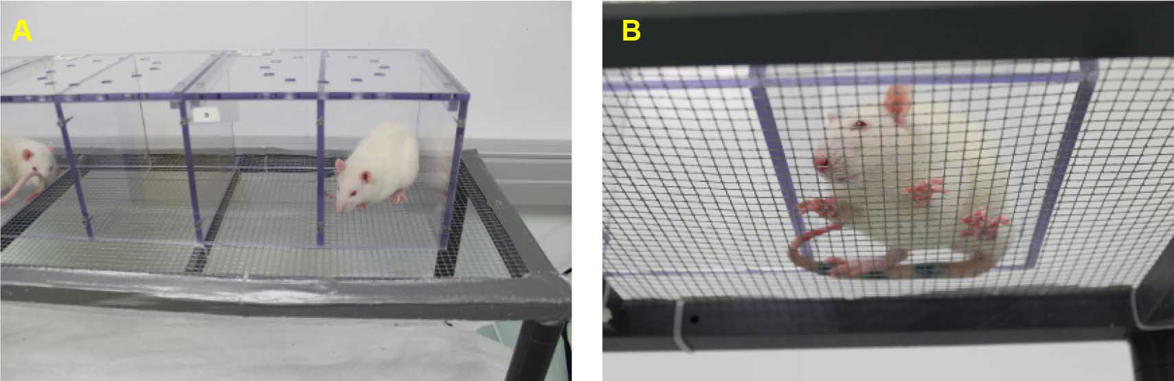 Assessment Of Mechanical Allodynia In Rats Using The