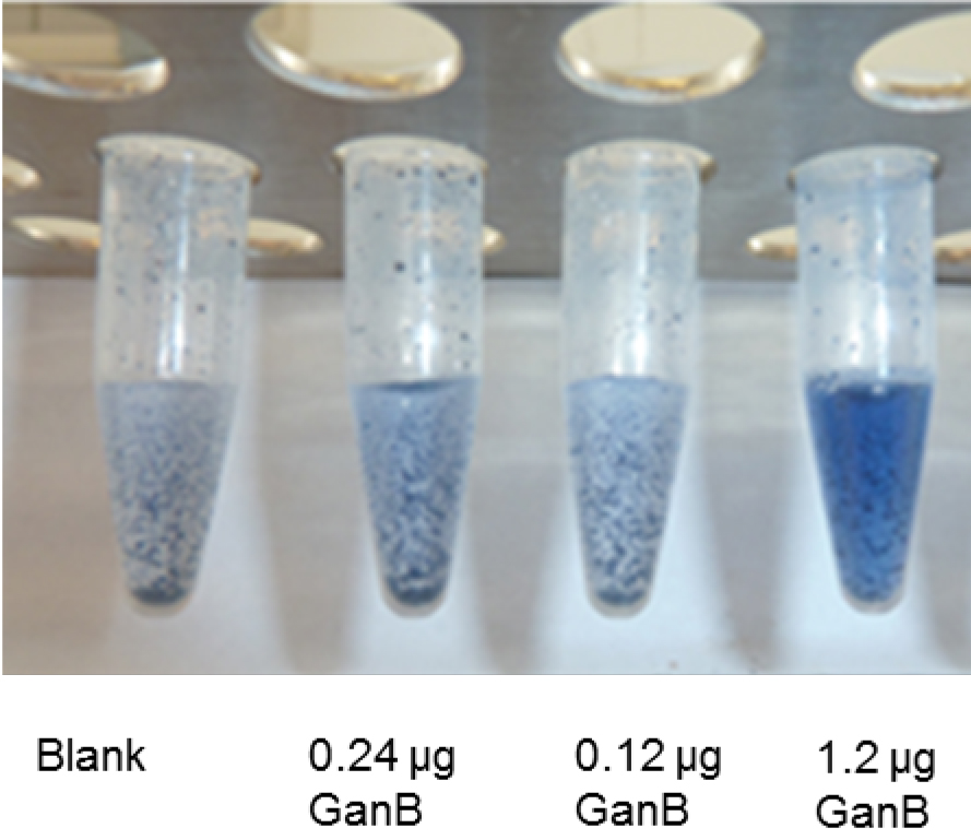Measurement Of The Galactanase Activity Of The GanB