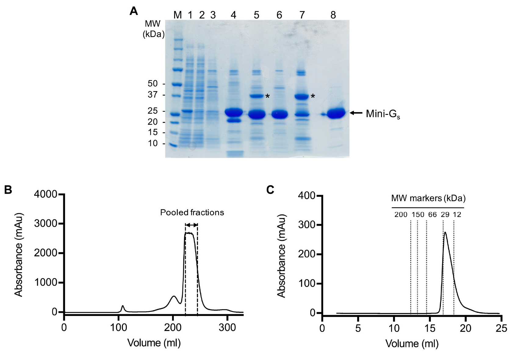expression and purification of rgfp from Bacterial ruvb protein was used as a house-keeping standard to normalize the detected rgfp expression methods for expression and purification of recombinant.