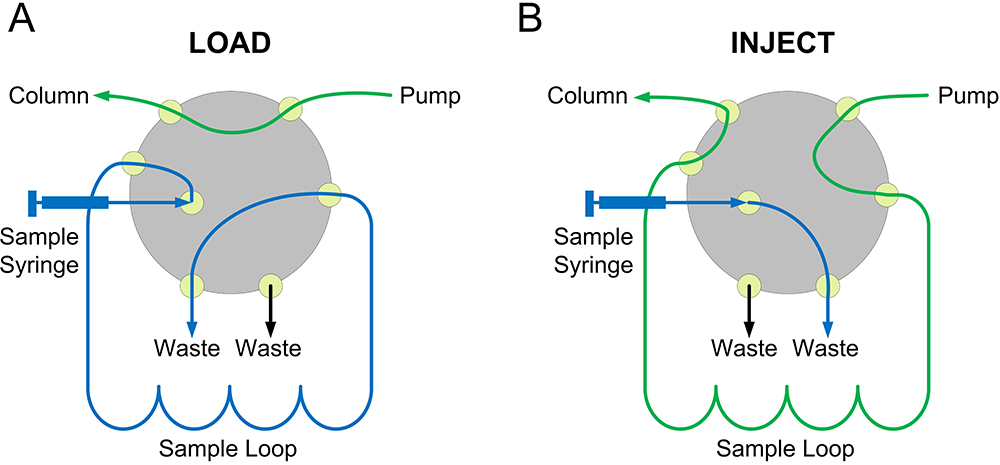 Determination of Hydrodynamic Radius of Proteins by Size