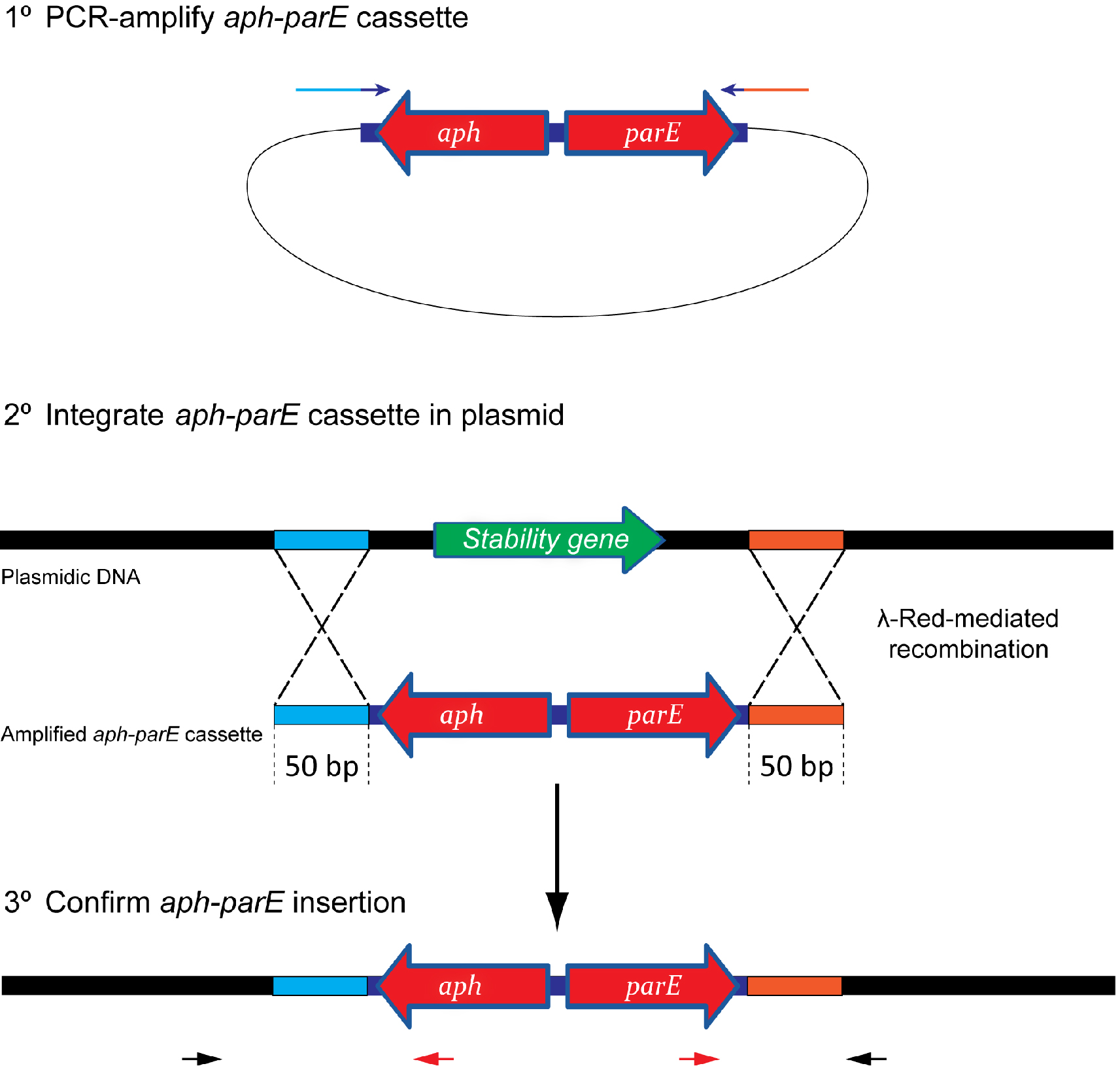 Evaluation of plasmid stability by negative selection in for Stability protocol template