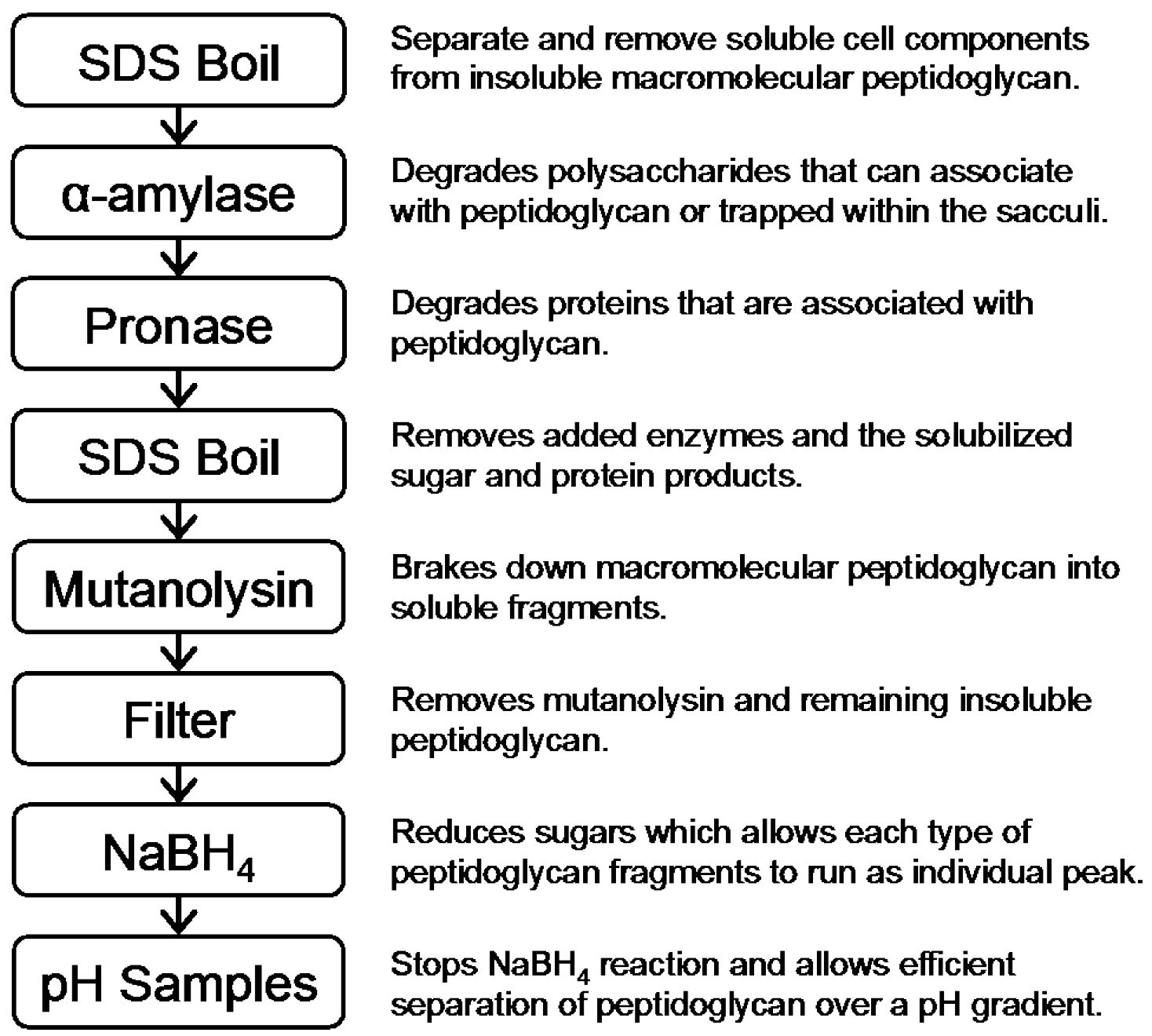 Digestion of Peptidoglycan and Analysis of Soluble Fragments