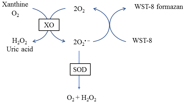 Superoxide Dismutase (SOD) and Catalase (CAT) Activity
