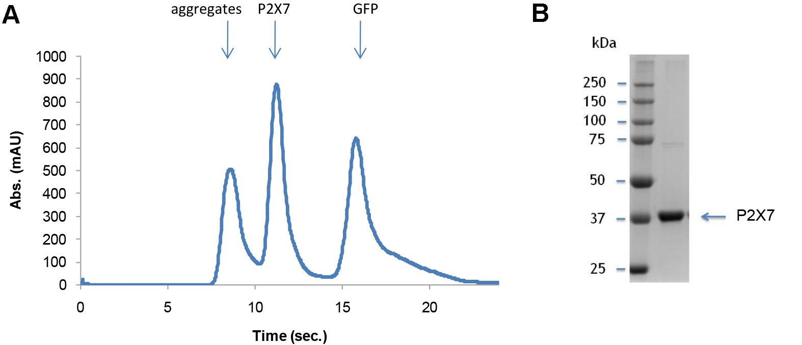 Expression and Purification of a Mammalian P2X7 Receptor