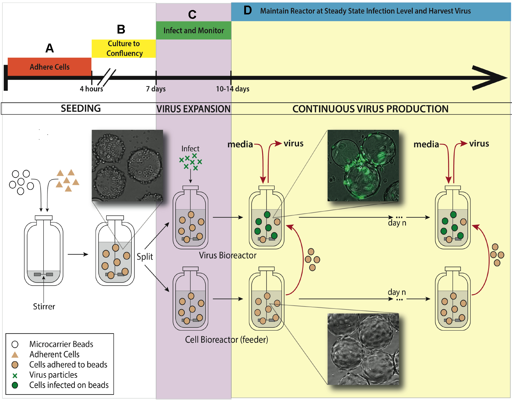 A Bioreactor Method to Generate High-titer, Genetically