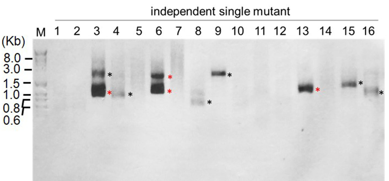 Identification of Insertion Site by RESDA-PCR in