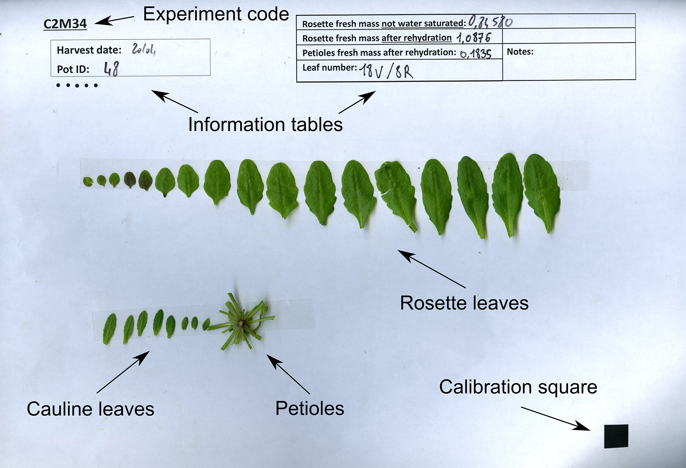 Measurement of Arabidopsis thaliana Plant Traits Using the