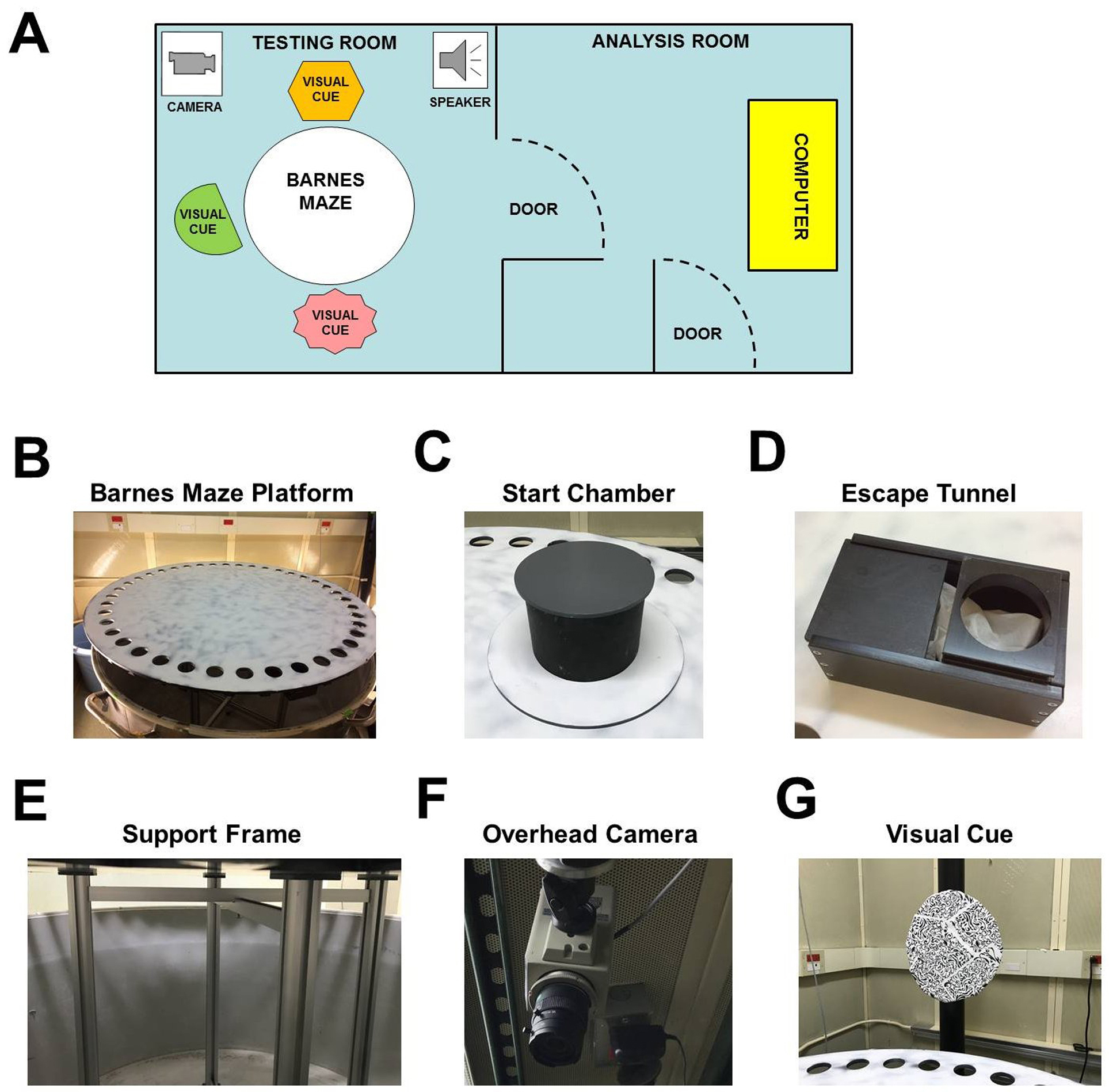 barnes maze procedure for spatial learning and memory inbarnes maze experimental setup a layout of behavioral testing room and adjacent room used for analysis b f images of the barnes maze platform (b),