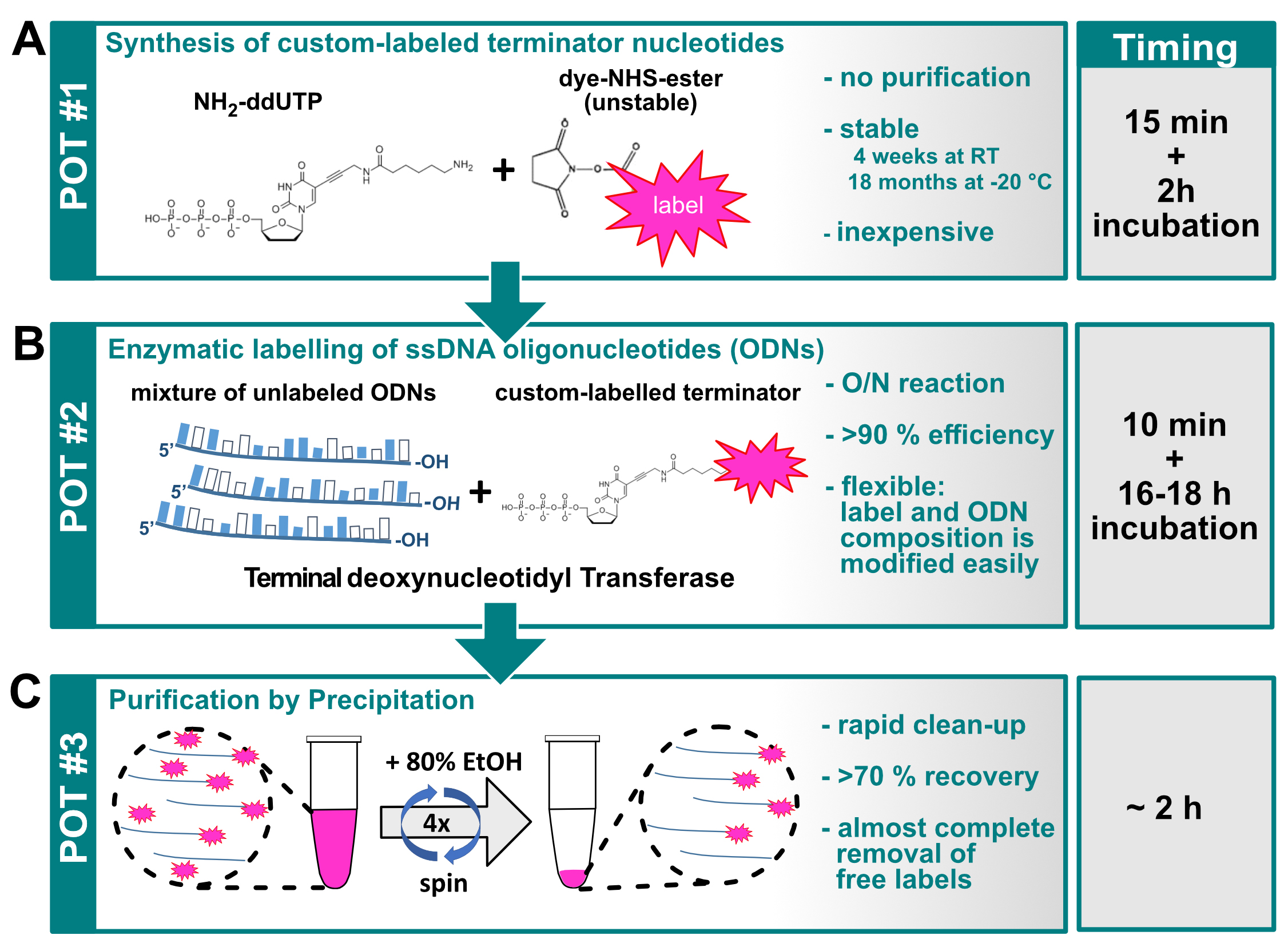 Terminal Deoxynucleotidyl Transferase Mediated Production