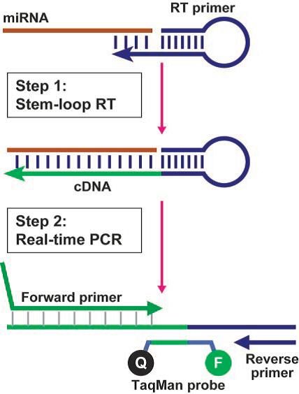 real time pcr protocol pdf