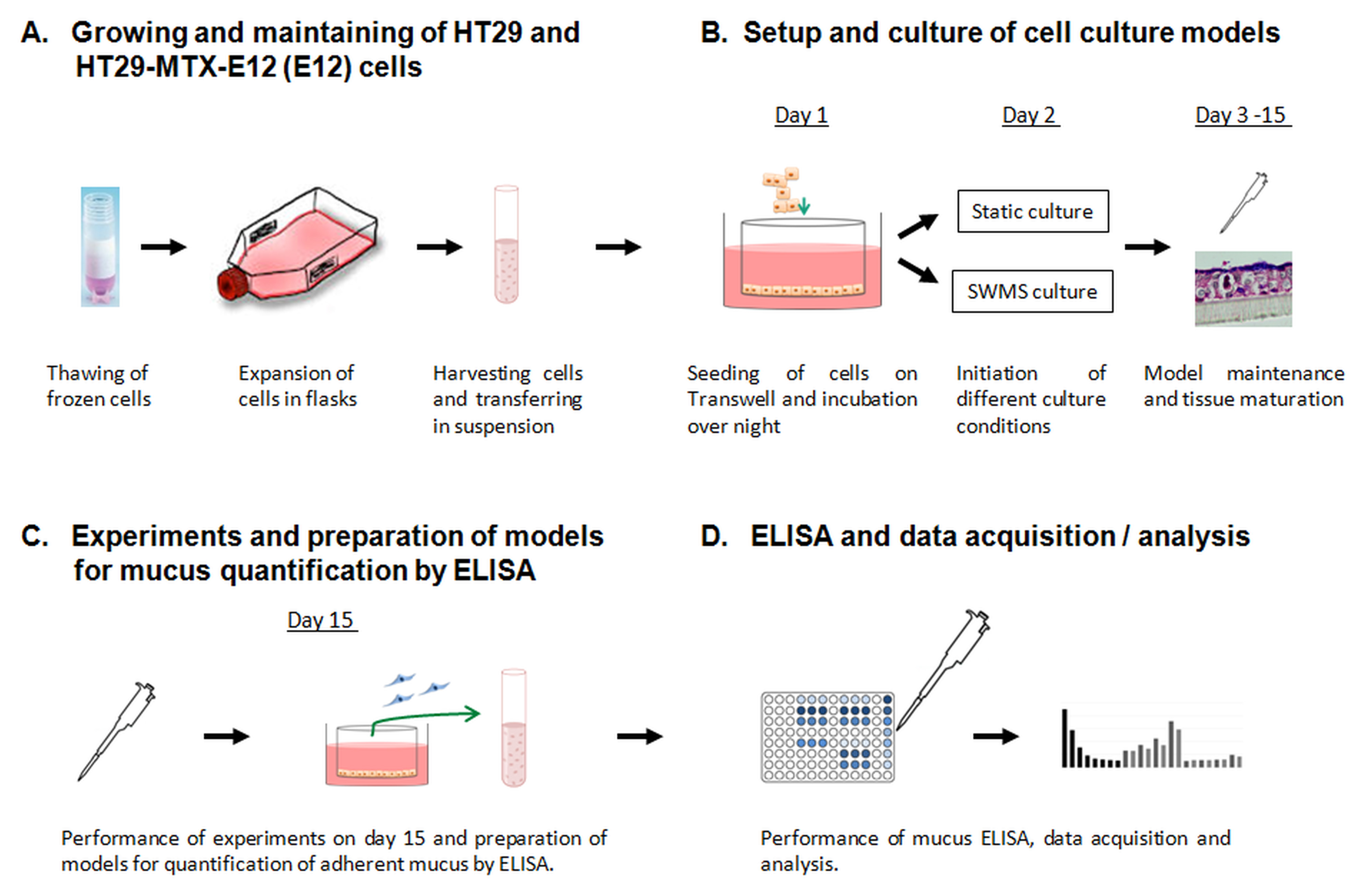 Enhancement of Mucus Production in Eukaryotic Cells and