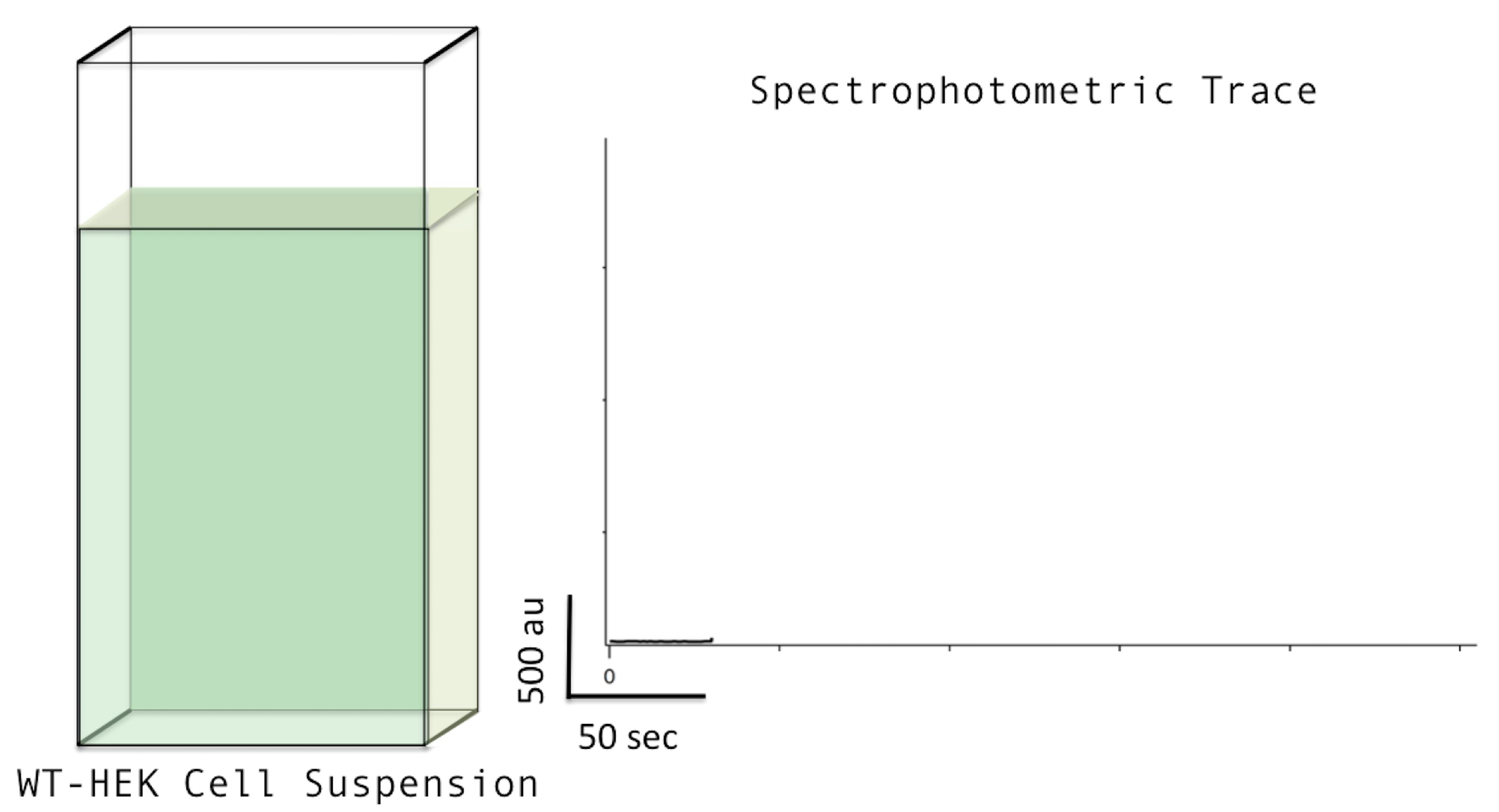 Fluorophore-Based Mitochondrial Ca2+ Uptake Assay