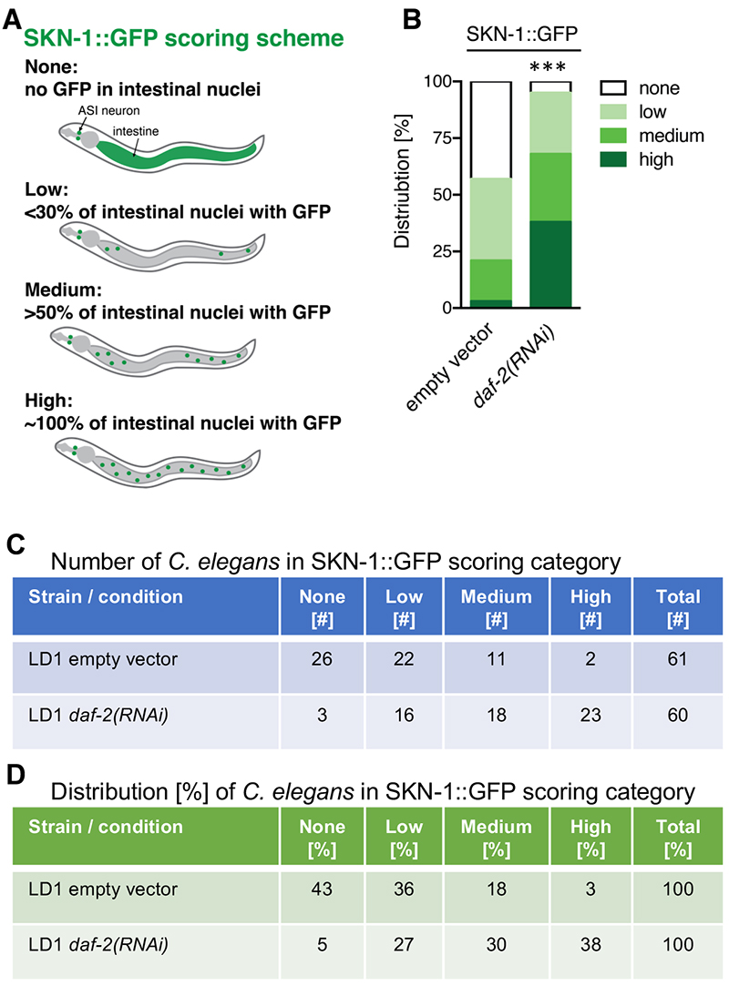 Overcoming Autofluorescence To Assess GFP Expression