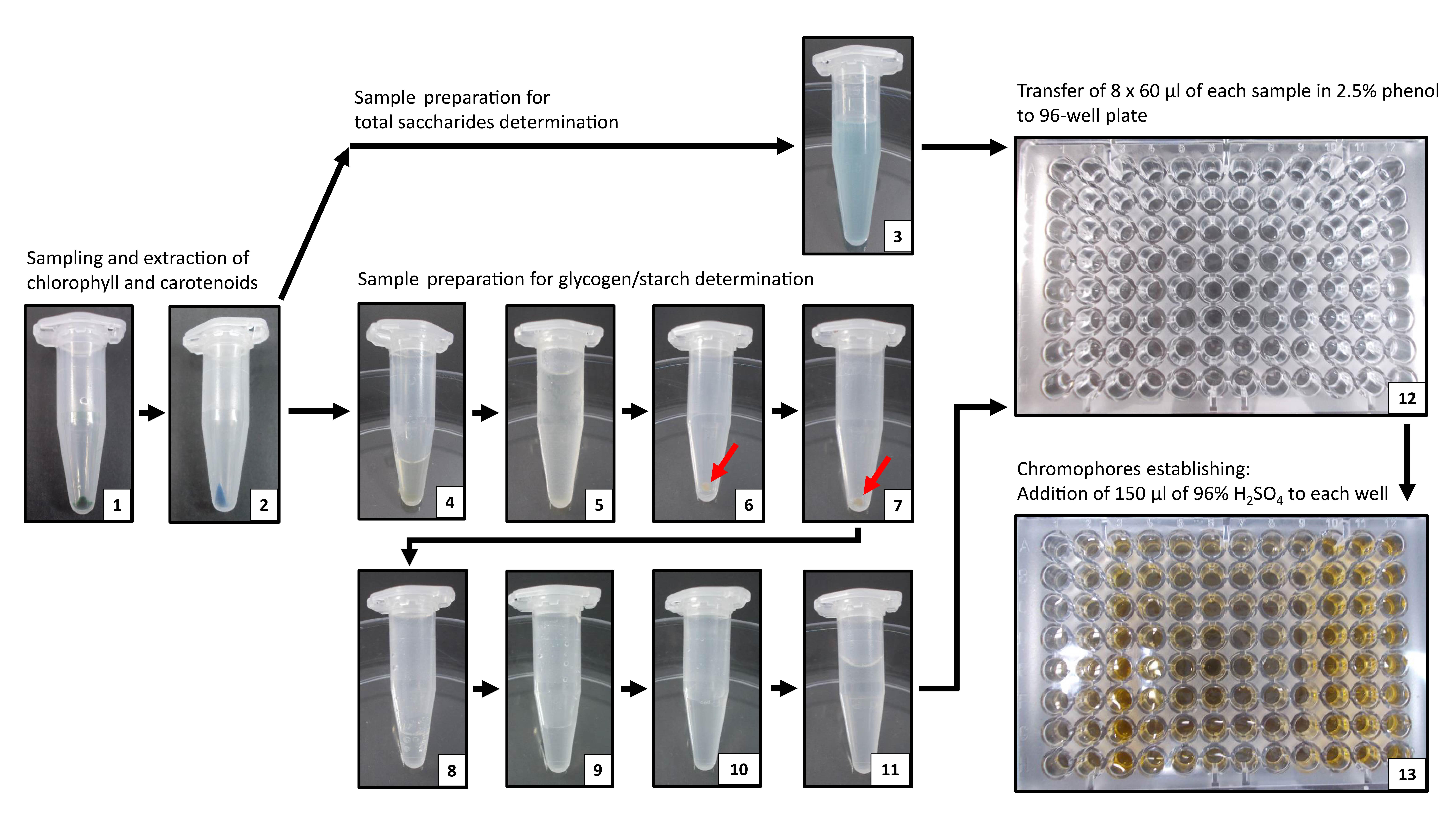 Determination of Storage (Starch/Glycogen) and Total