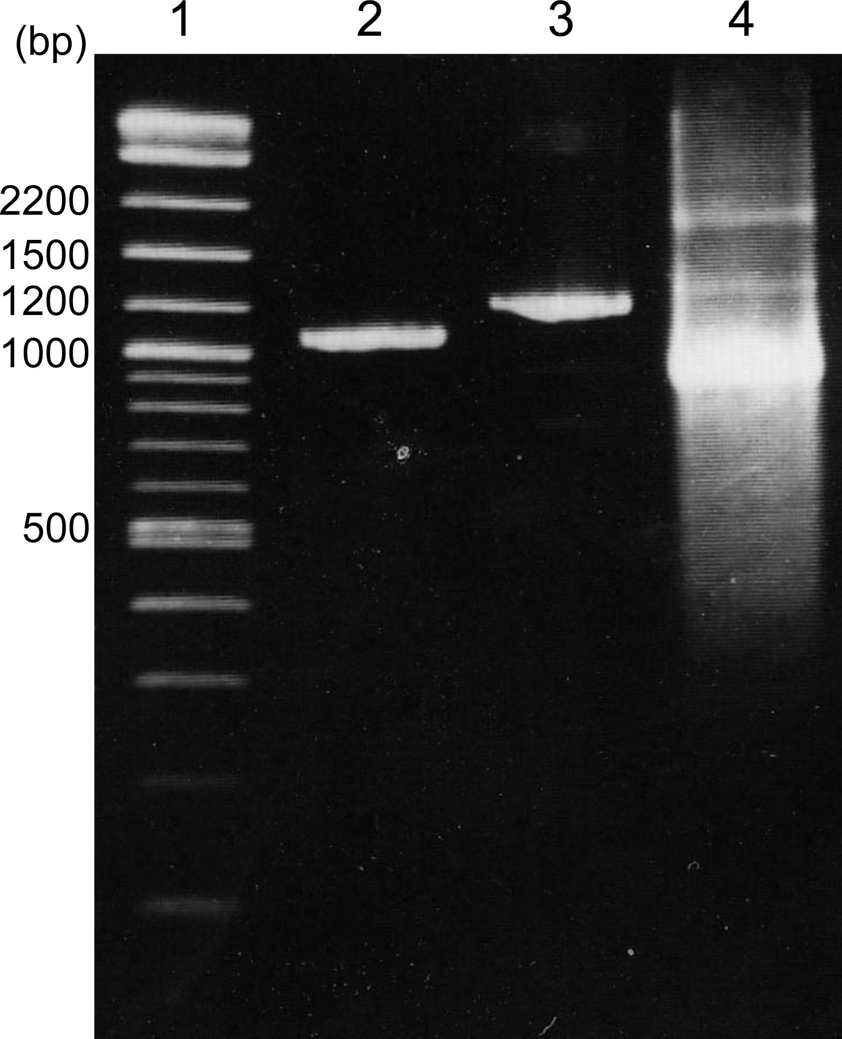 In Vitro Protein-DNA Binding Assay (AlphaScreen®