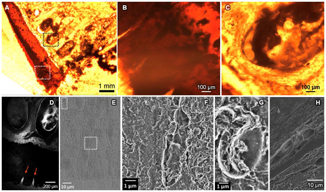 Electron Microscopy Sample Preparation Protocol Enabling
