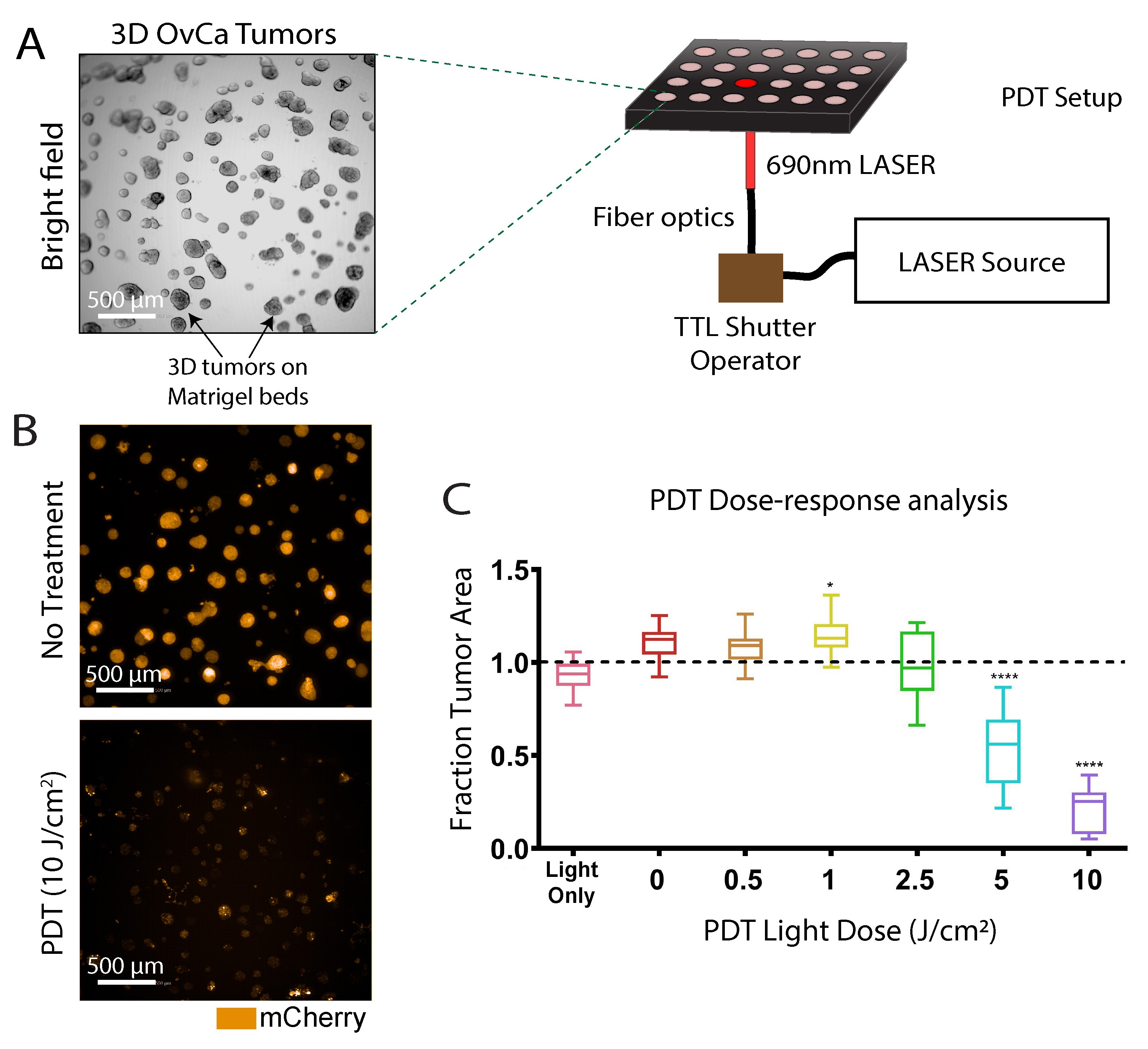 Photodynamic Therapy In A 3d Model Of Ovarian Cancer
