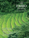 The EMBO Journal