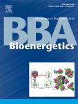 Biochimica et Biophysica Acta (BBA) - Bioenergetics